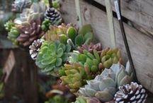 Gardening / by Nanna
