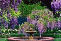 Dreamy Flowering Vines / by Didi Dreams...