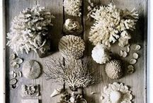 collections / collections of beautiful, wonderful things.