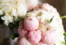 Pink Wedding / A pastel pink wedding explosion. / by Jessica Farber