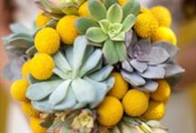 Succulent Green and Yellow Wedding / Weddings with a green twist. / by Jessica Farber