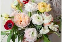 Bouquets / by Jenny Tuttle