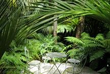 Ideas for Haberfield / Landscape Architecture and design