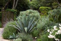 Ideas for Barron Street / Garden design