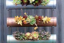 Urban Gardening / Pflanzen, Dekoideen & Tipps zum Gemüse und Kräuter anbauen für Drinnen und Draußen. Schau mal, was sich auf Balkon & Terrasse so alles pflanzen lässt.