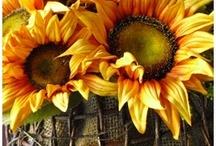 Autumn / by Jeanne Caras