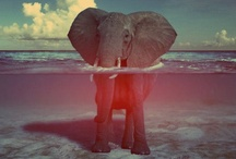 elephants / by Alicia Vega