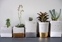 Centerpiece Inspiration / indoor garden to decorate your table