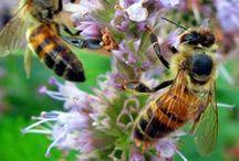 Bees N Honey / by Jeanne Caras