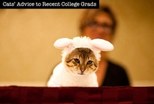 Cats' Advice to Recent College Grads