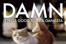 Cats Quote Rap
