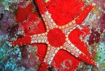 Star Fish / Star Fish