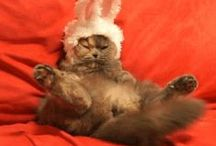 Cats on Being Made to Wear Bunny Ears