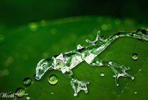 Liquid Assets..