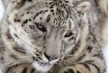 Into the Wild... / nature,animal,mother,snow,usa,wildlife,outdoors,horizontalarctic,alaska,predator,arctic,ocean,environmentwilderness,adventure,cub,northamerica,skill,marine mammal,island,arctic,national,wildlife,refuge,survival,protected.....