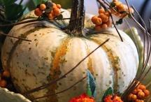 * Pumpkins & Gourds * / by Sheila Murphy