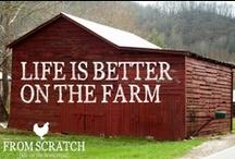Life on the farm!