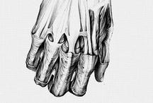 REF [anatomy]