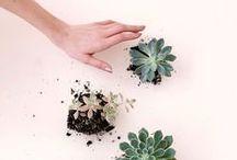 - Nature - / Un tableau pour les amateurs de belles plantes. Cactus, plantes grasses, jolis bouquets et autres inspirations fleuries.