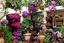 Gardens / by Umm Yahya