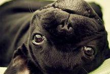 ANIMALES / Los amo con el corazón terriblemente !!! / by Daniela Salvucci