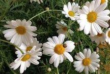 Just flowers / by Barbara Thomas