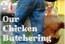 Chicken Care - Butchering and Meat / by Robyn Guptill