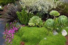 Gardens Plants & Ideas / Inspiring green when ever, where ever!