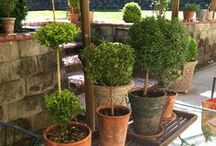 topiaries / by Candi Fry
