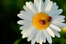 I called her ladybug. / For my daughter who is in Heaven; I love you, mom. / by Ronna Harness-Barber