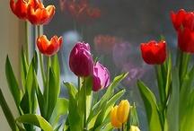Ready for spring ! / by Erika Motsinger