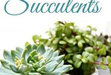 succulents / by Leticia Lee