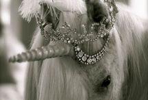 Holy Unicorn! / Unicorns & Magic
