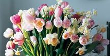 """Spring / """"It is spring again. The earth is like a child that knows poems by heart."""" ~Rainer Maria Rilke"""