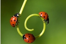 ladybugs for gabriella / by S. Ordes Salsberg