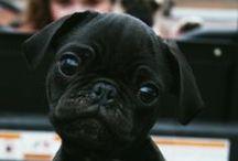Pups / by Hannah Eleanor