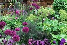 Gardening / by Jane Lambert
