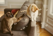 Cats, kitties and other felids / Cats, cats and cats, of all sizes and age. Simply anything feline.