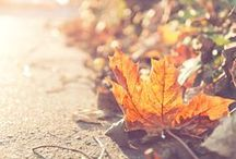 Autumn leaves / Photos of leaves and anything else you connect with autumn.