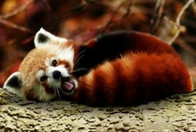 Simply adorable / Any adorable and cute animals, wild or domestic. Puppies and bunnies and red pandas being simply adorable.