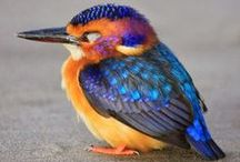 Birds / Of any sizes and colours, there are so many beautiful feathered creatures.