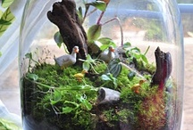 So Crafty: Terrarium Love / by Smirking Revenge