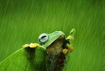 Frogs & Chameleons! / ...and other cool creatures, too!