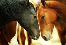 Horses / Beautiful animals endowed with raw strength and speed.