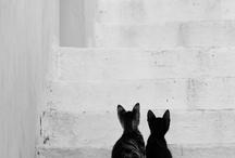 cuteness :) / by April Bauknight