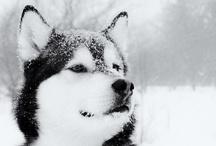 Animalz! / #cute #adorable #animals  / by Joyce Leong