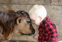 Life on the Farm / Ain't dairy farm life grand?