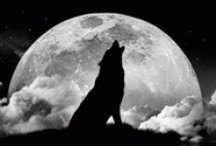 Howling at the Moon / by Denise Wootton