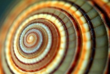 Fibonacci / by Denise Wootton
