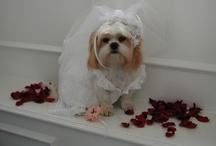 weddings!! / by timmers gunatilaka